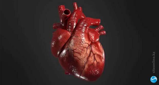Сердце напечатали на 3-D принтере